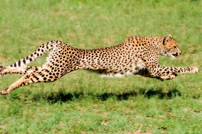 De Wildt Cheetah Centre
