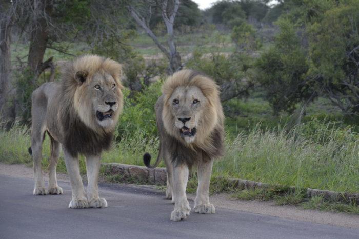 Big 5 Kruger Park Classic Safari